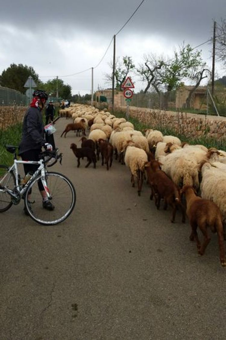 Picture 12: Fred Rompelberg 268 km: The cycling paradise Mallorca for many cyclists!