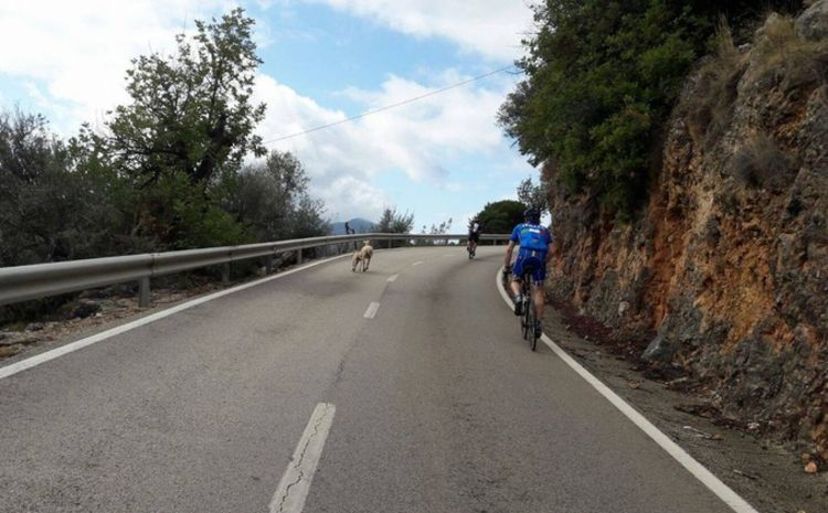 Picture 5: Fred Rompelberg 268km: Especially for the new year, a 5th trip to Mallorca completely costless!