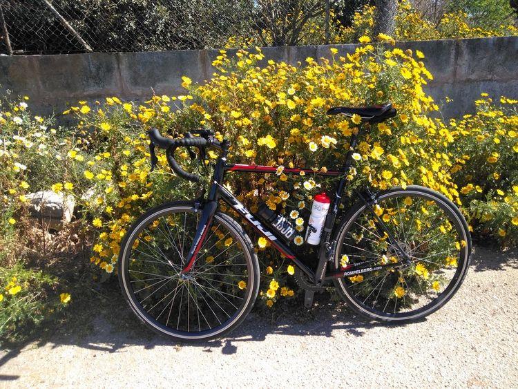 Picture 16: Fred Rompelberg 268 km: Come to Mallorca and take advantage of our new Fuji bikes!